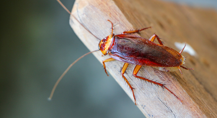 Killgerm Principles of Insect Control